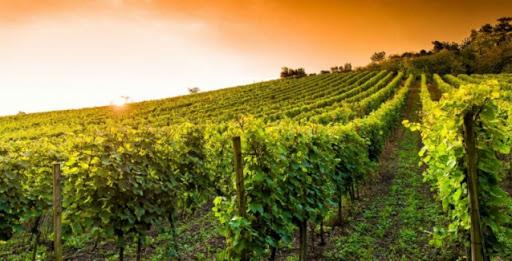 vino calabrese: elenco delle qualità da acquistare